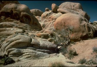 800px-Joshua_Tree_National_Park_JOTR3615